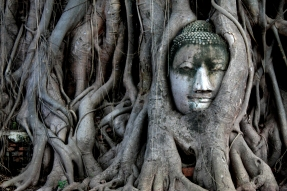 Stone_Buddha_covered_in_tree_roots
