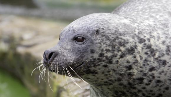 Seal-D12822