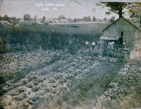 Halls_Farm